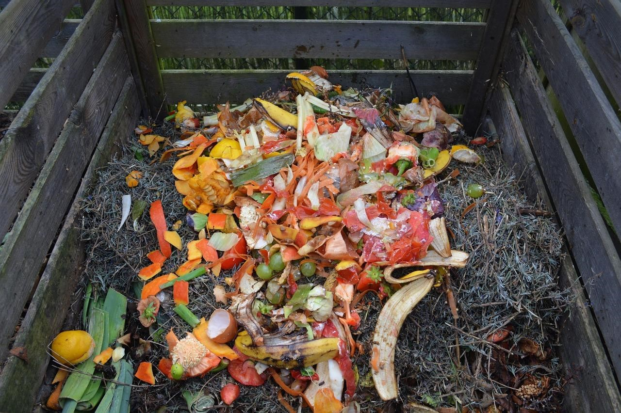 Best Compost Bins