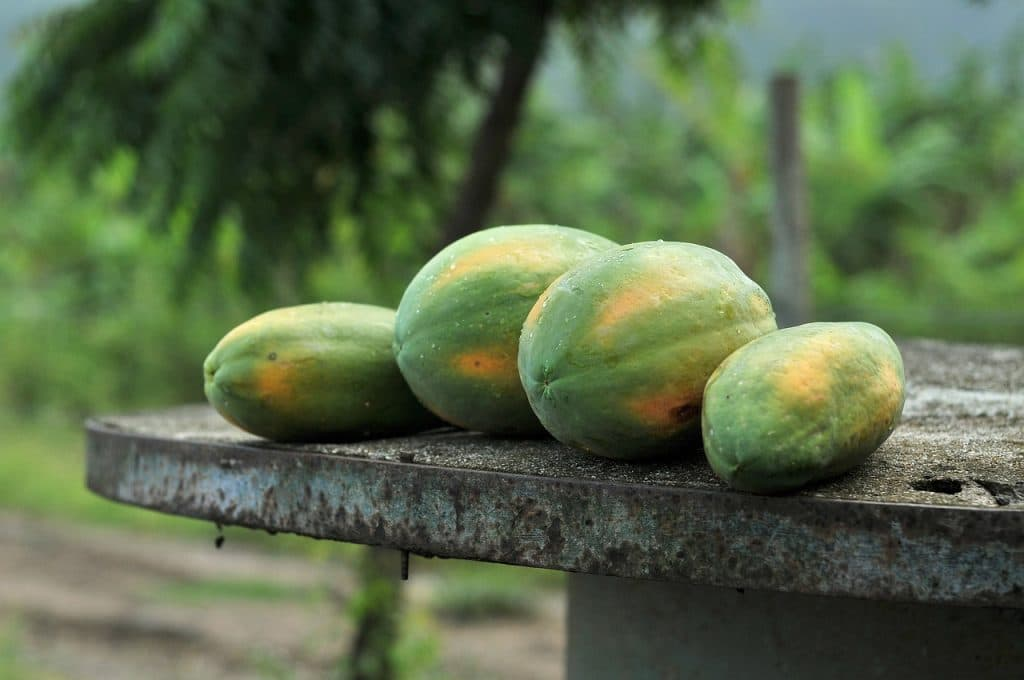 four papaya fruits in the table