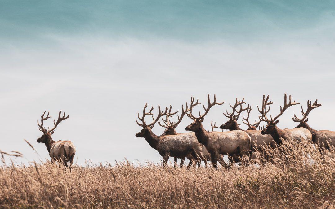 The 15 Best Deer Calls to Buy This Year – BestSeekers